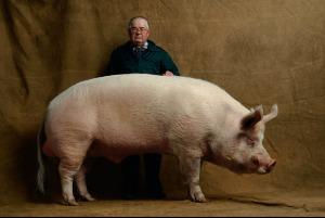 gros-cochon
